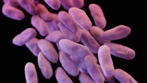 FIN DE VIE SUR TERRE ! Une super-bactérie mortelle dans un hôpital de Los Angeles