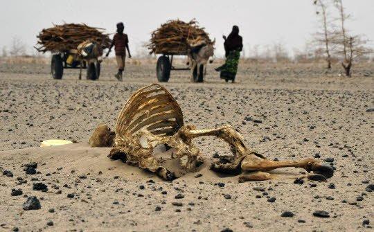 FIN DE VIE SUR TERRE ORGANISEE :Des famines épouvantables se répandent dans toute l'Afrique