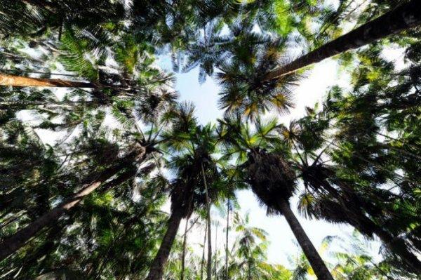 FIN DE VIE SUR TERRE ORGANISEE : Biodiversité: 9600 espèces d'arbres menacées d'extinction