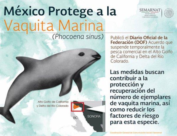 FIN DE VIE SUR TERRE ORGANISEE : L'extinction du marsouin du Pacifique est prévue pour dans les prochains mois