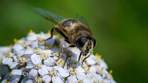 FIN DE VIE SUR TERRE ORGANISEE : Le nombre d'insectes a baissé de 78% depuis 1989