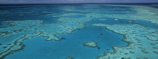 FIN DE VIE SUR TERRE ORGANISEE : Grande barrière de corail : l'impact du blanchissement plus grave que prévu