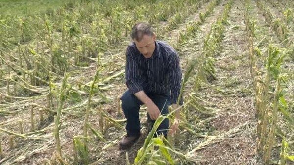 BIG ONE MONDIAL IMMINENT ET FIN DE VIE SUR TERRE ! ARRIVEE DE NIBIRU :Canada, du jamais vu : des récoltes complètement détruites par la grêle