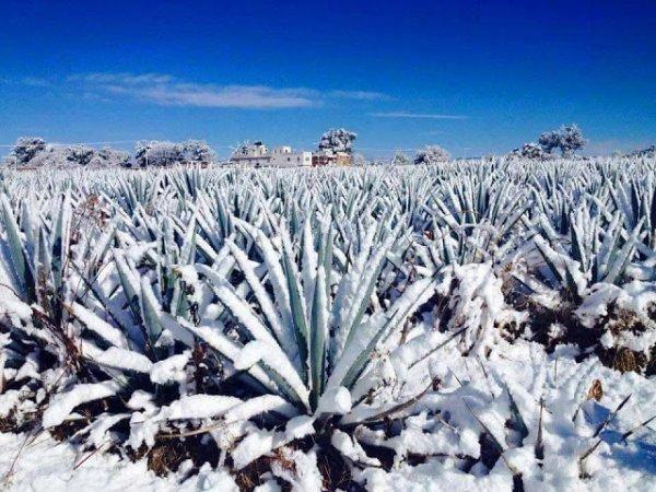 BIG ONE MONDIAL IMMINENT ET FIN DE VIE SUR TERRE ! ARRIVEE DE NIBIRU : Il a neigé au Mexique
