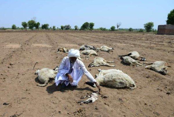 BIG ONE MONDIAL IMMINENT ! ARRIVEE DE NIBIRU : INDE :FIN DE VIE SUR TERRE :La sécheresse en Inde provoque des comportements inhabituels chez les animaux