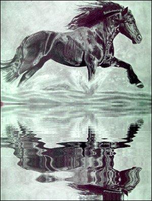 reflet dans l'eau