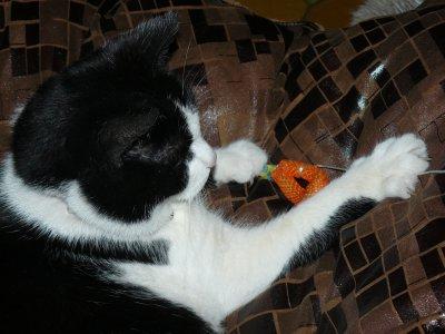 Minuit adore ses nouveau jouets à mâcher!