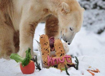 Au revoir, Knut ...