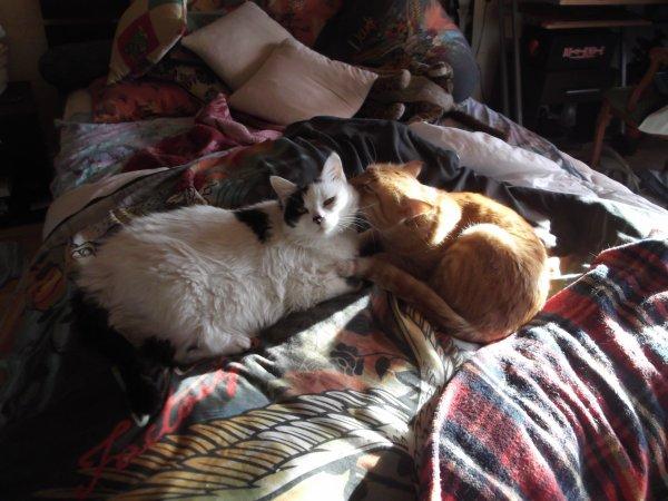 mes chats aven et mtn