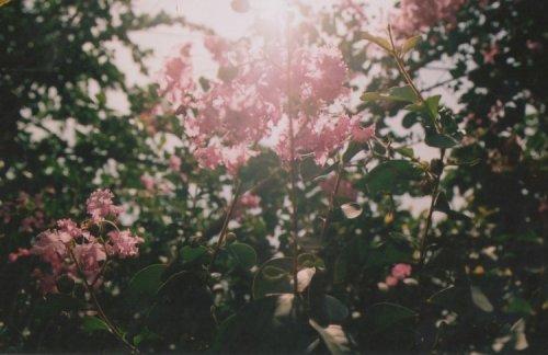 1.Athéna