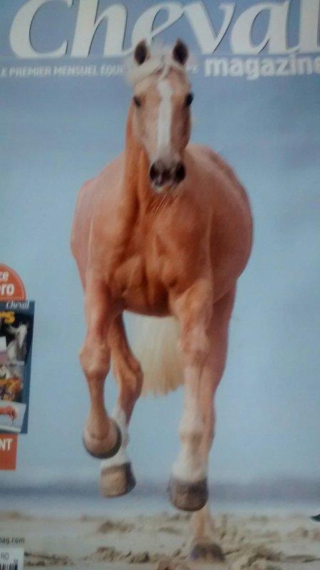 Je suis fan de cheval