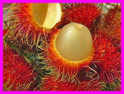 """Le fruit préféré des tahitiens """"le ramboutan"""""""