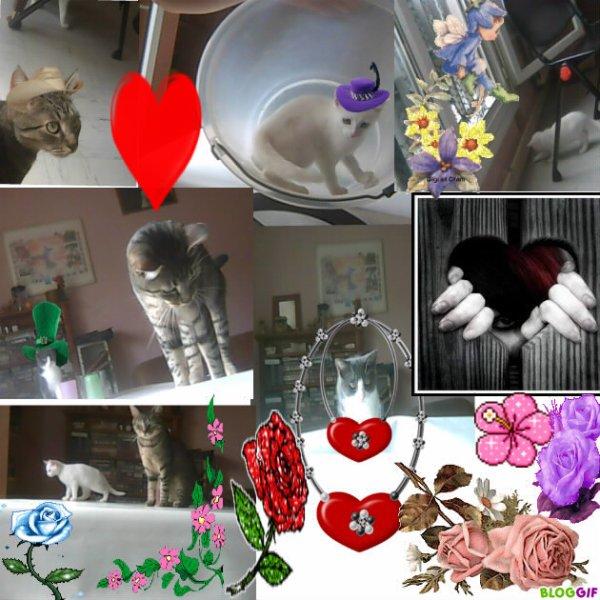 mes chats gysmo juliette et blanche