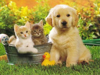 chat et chien trop mimi