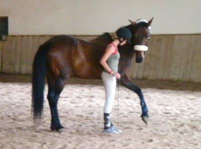 Un poney, une fille, une histoire...♥