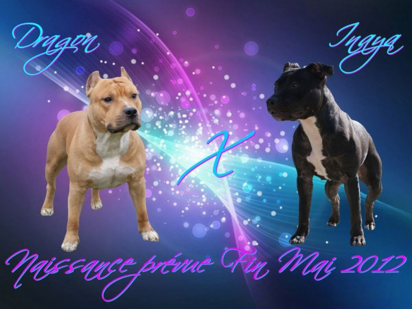Breeding 2012 - E ' Dragon X F ' Inaya - Gestation Confirmée