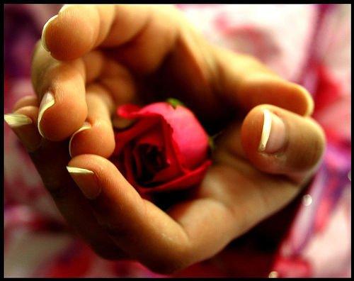 La Rose Rouge Poeme De Vandevandel Sabine Belles Citations