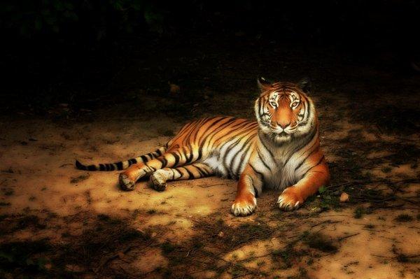 Opale tigre d'Anna
