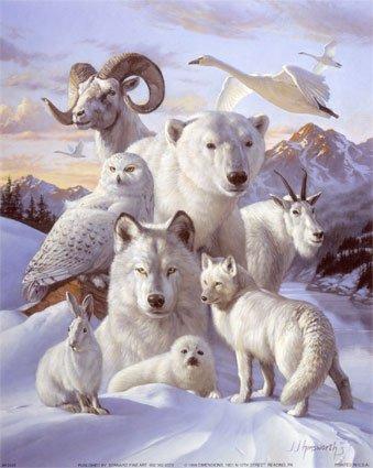 Les animaux multiples de Nolina