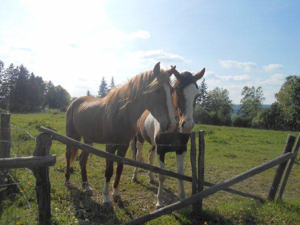 flora et justine: chevaux pres de chez nous <3<3<3<3<3<3<3<3<3