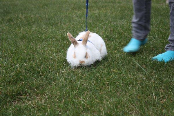 notre petit lapin adorée