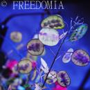 Photo de Freedomia