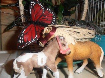 Séance photo avec mes nouveau chevaux