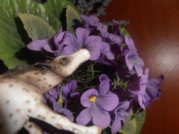 Chevaux dans les fleures !!