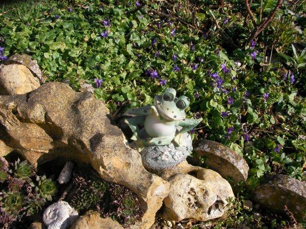 Le jardin de la grenouille !!!