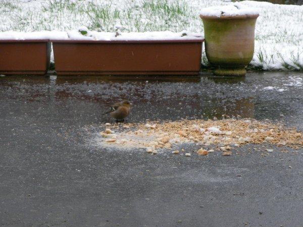 Zont faim les oiseaux !!!