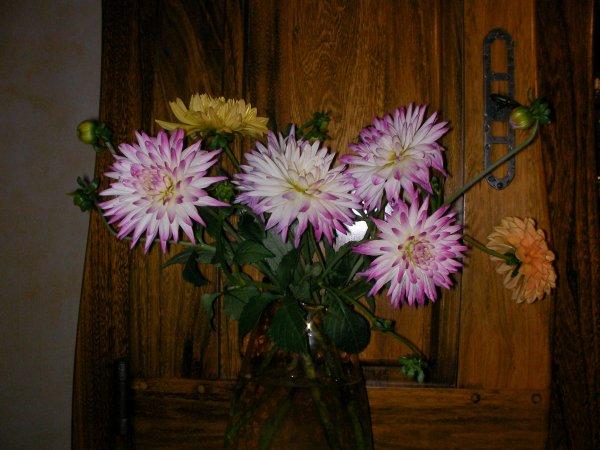 Des fleurs pour vous !!!