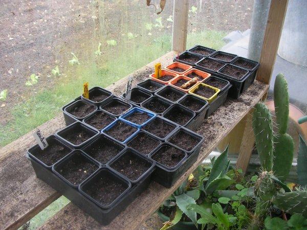 Les semis pour le potager ......
