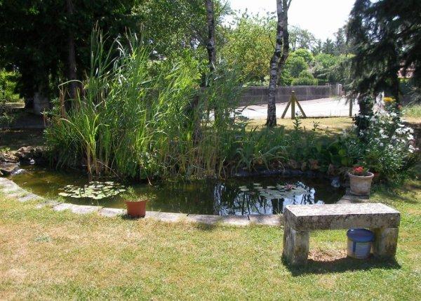 Le bassin aux poissons et aux grenouilles !!