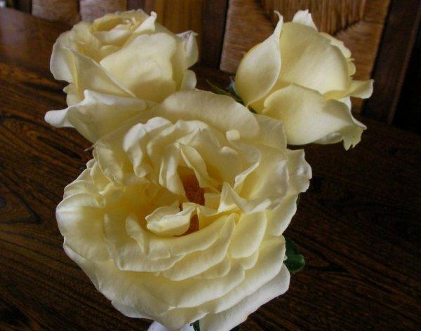 3 roses pour vous !!