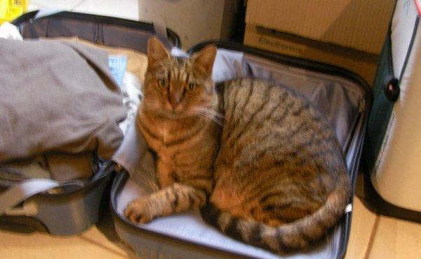 Nous les chattes nous dormons ou bon nous semble ...et toc !!!