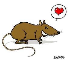 Les Rats et les Fées !!!