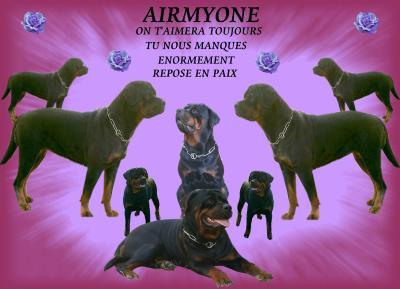 AIRMYONE  décédée tragiquement dans la nuit du 14 au 15 décembre 2007