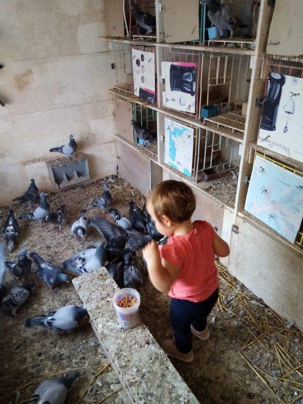 ma fille commence à apprécier les pigeons! :-)