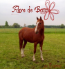 Xx--Horse-I-Love--xX