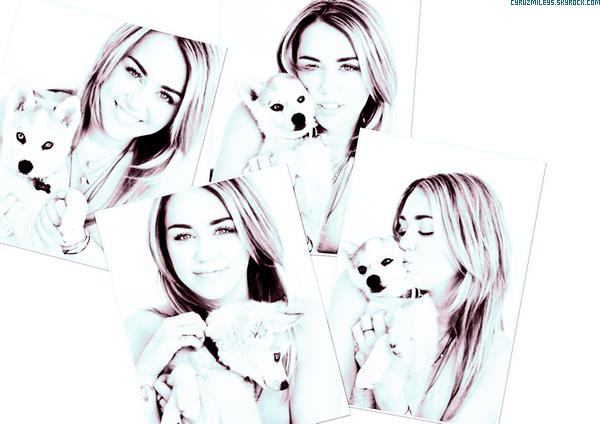 """▄ Découvre un trèèès Beau Photoshoot de Miley.C Fait en 2012 """"The Conversation"""". Tu aime ?"""