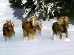tro bo les chevaux