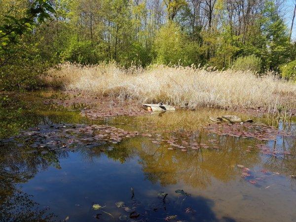étang Bourget