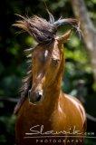 Photo de chevaux---passion45