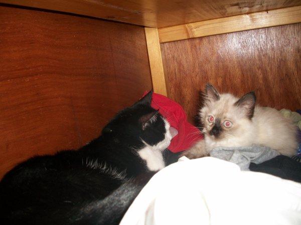 Mes deux amours de chats.