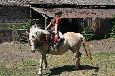 Article 14 : Le cheval enseigne à l'homme la maîtrise de soi, et la faculté de s'introduire dans les pensées et les sensations d'un autre être vivant.