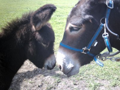 Article 20 : Les chevaux sont des créatures mystérieuses, ou divines. ♥.
