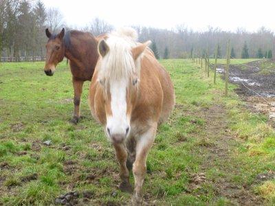Article 28 : Quand je suis sur toi, quand je suis avec toi, j'ai l'impression d'être un cheval, j'ai l'impression de lire dans tes pensées.