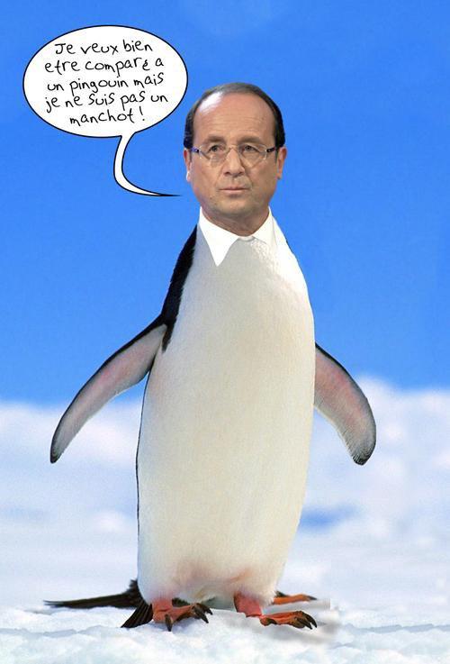 Un pingouin peut-être ou un manchot ?