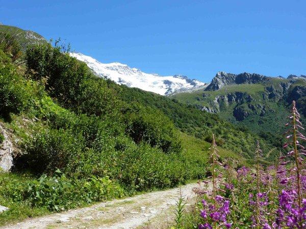 Un petit coup d'oeil vers le glacier du Génépi