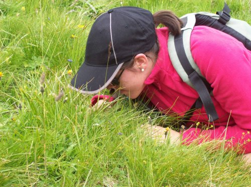Une autre découverte pour Amélie: la Nigritelle